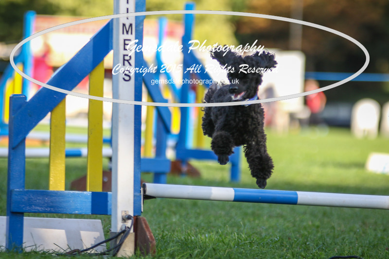 Southdowns Agility 25th September 2016-6031