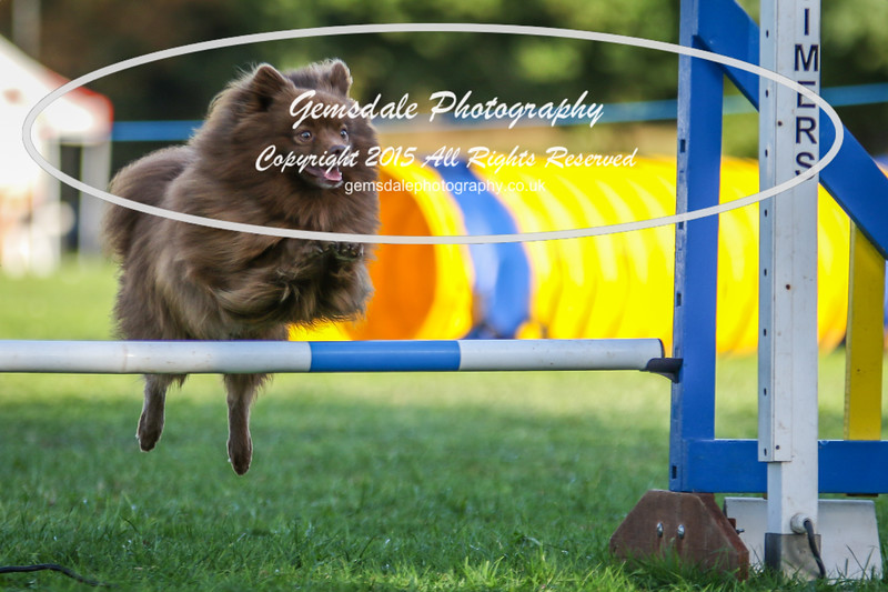 Southdowns Agility 25th September 2016-6027