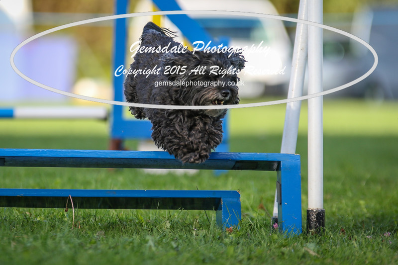 Southdowns Agility 25th September 2016-6040