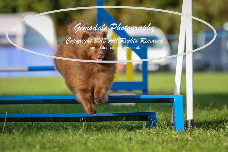 Southdowns Agility 25th September 2016-6025
