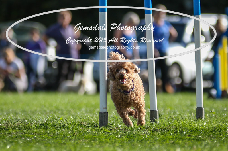 Southdowns Agility 25th September 2016-6002
