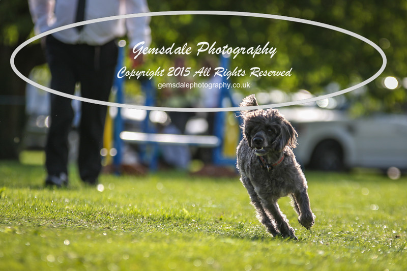 Southdowns Agility 25th September 2016-6004