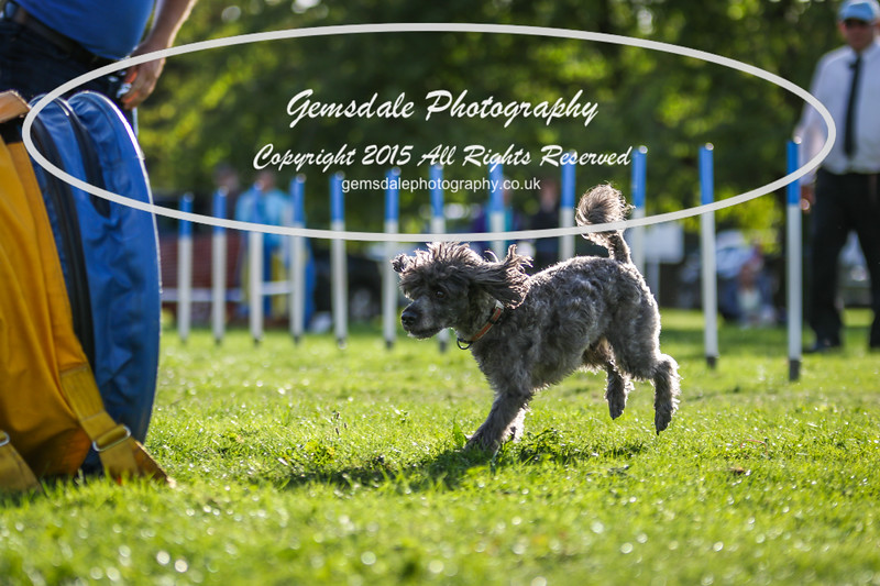 Southdowns Agility 25th September 2016-6005