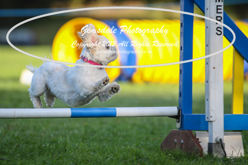 Southdowns Agility 25th September 2016-6044