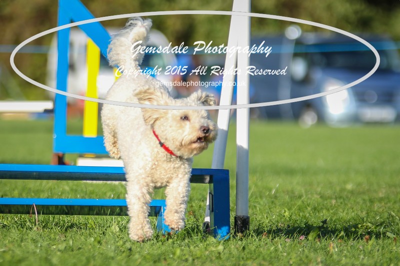 Southdowns Agility 25th September 2016-6018