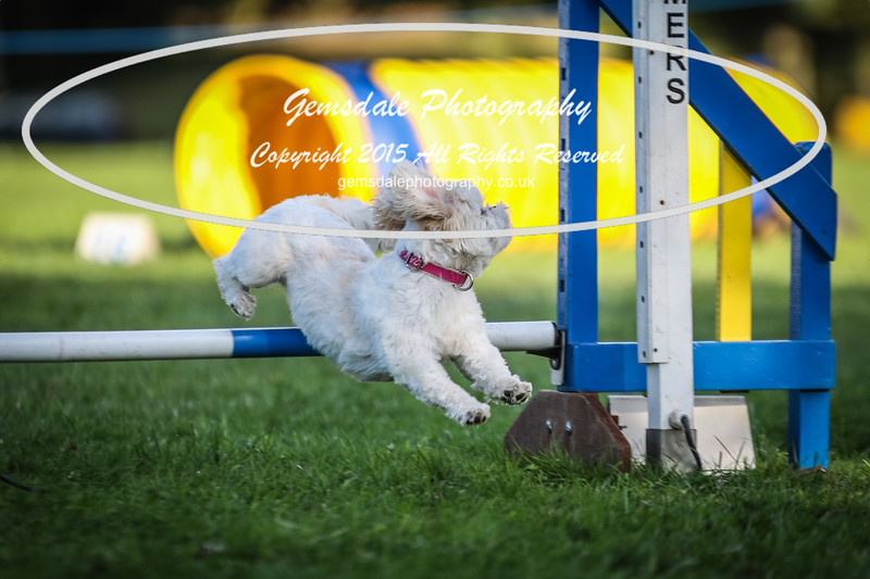 Southdowns Agility 25th September 2016-6045