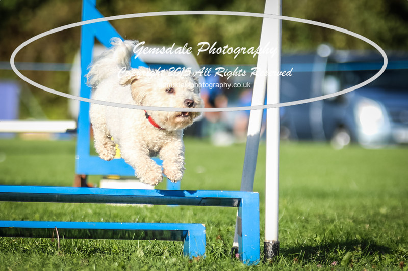 Southdowns Agility 25th September 2016-6017