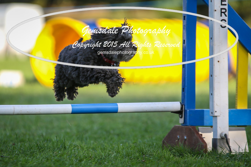 Southdowns Agility 25th September 2016-6041