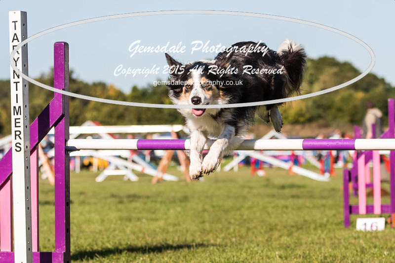 KC Southdowns Agility September 2015 -2018