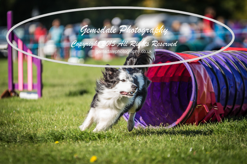 KC Southdowns Agility September 2015 -2028