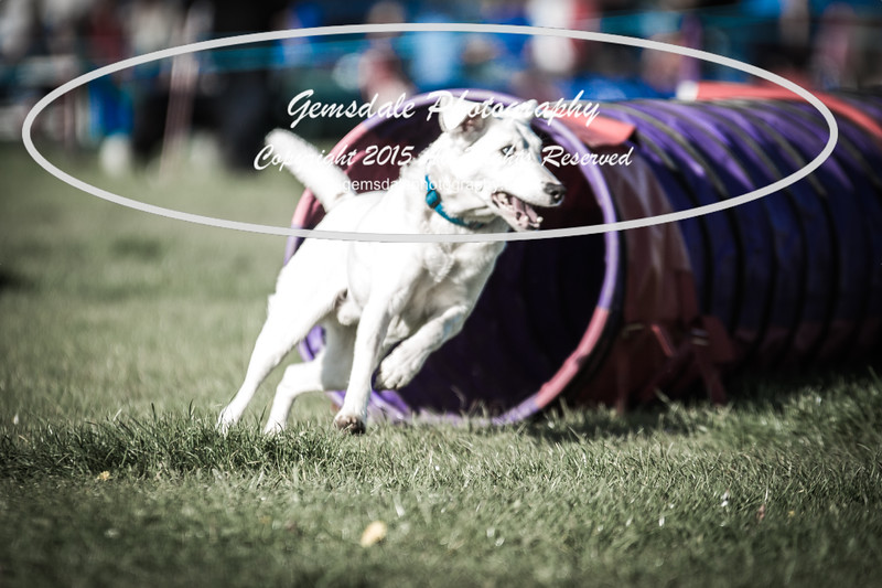 KC Southdowns Agility September 2015 -2027