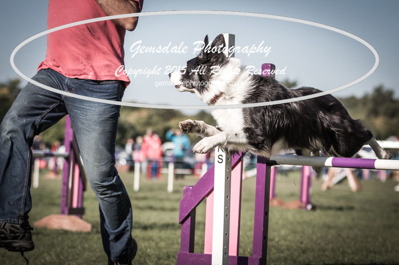 KC Southdowns Agility September 2015 -2007