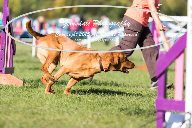KC Southdowns Agility September 2015 -2040