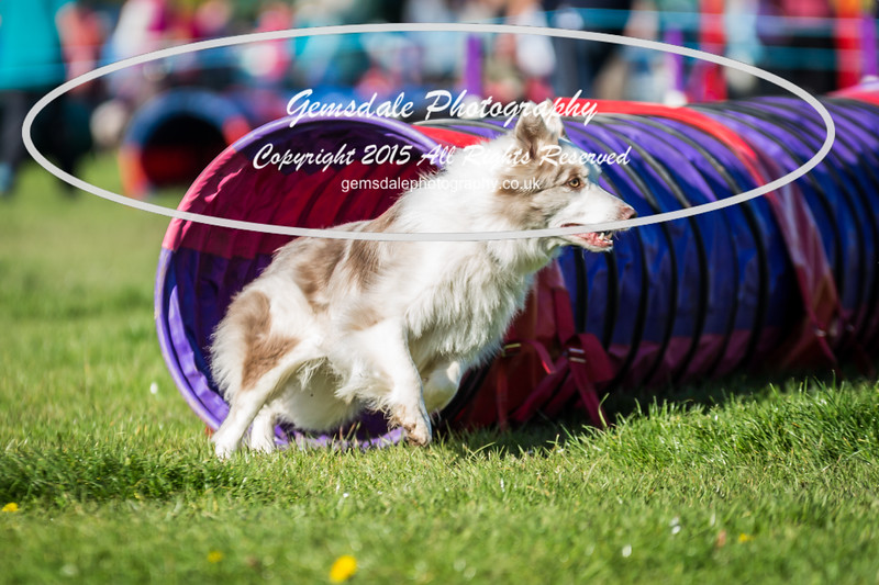 KC Southdowns Agility September 2015 -2024