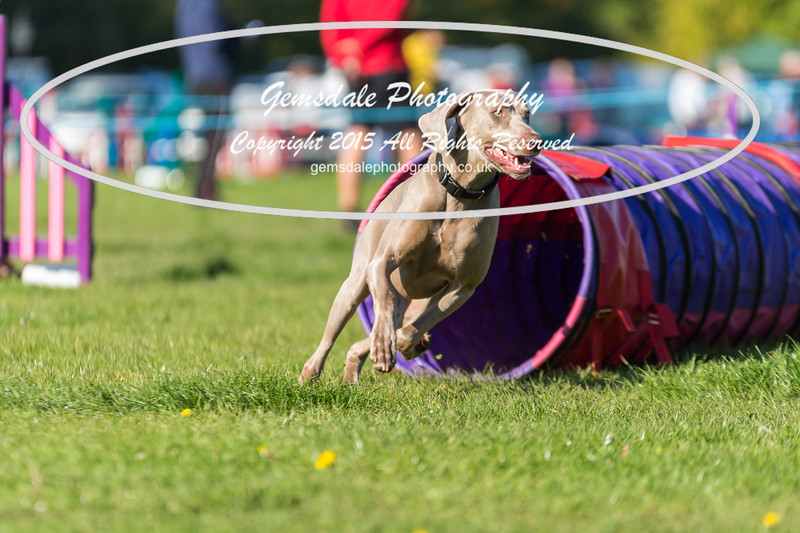 KC Southdowns Agility September 2015 -2043