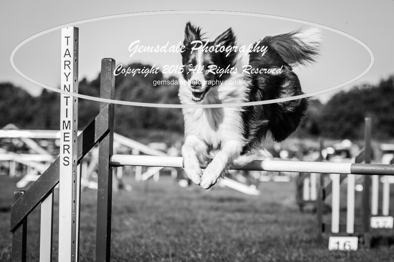 KC Southdowns Agility September 2015 -2014