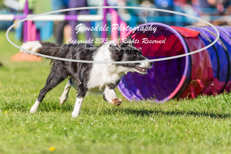 KC Southdowns Agility September 2015 -2006