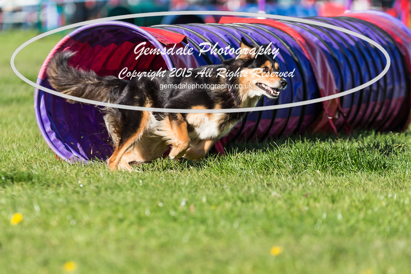 KC Southdowns Agility September 2015 -2031