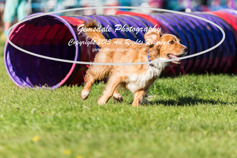 KC Southdowns Agility September 2015 -2003