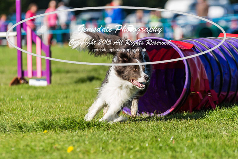 KC Southdowns Agility September 2015 -2013