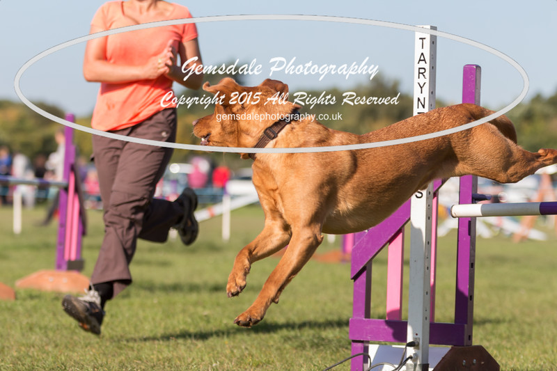 KC Southdowns Agility September 2015 -2041