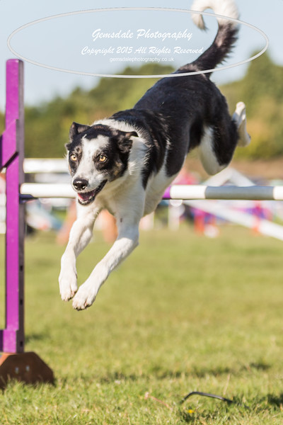 KC Southdowns Agility September 2015 -2033