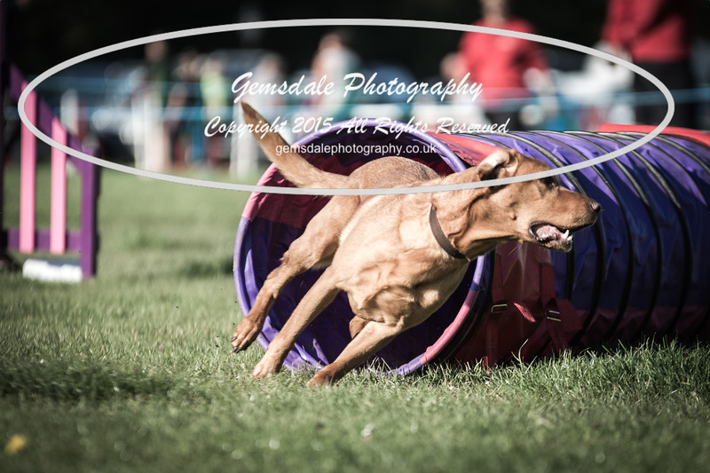 KC Southdowns Agility September 2015 -2039