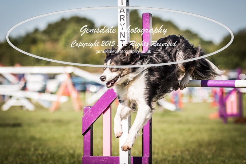 KC Southdowns Agility September 2015 -2038