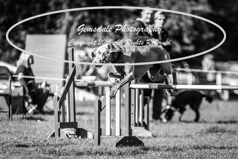 KC Southdowns Agility September 2015 -2042