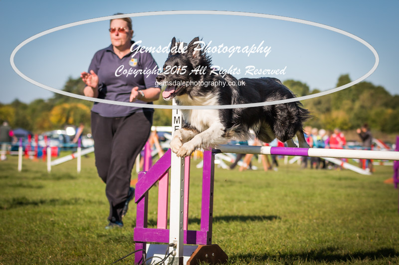 KC Southdowns Agility September 2015 -2002