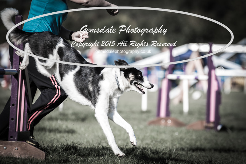 KC Southdowns Agility September 2015 -2032