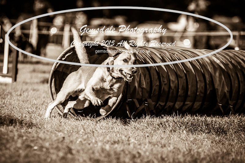 KC Southdowns Agility September 2015 -2004