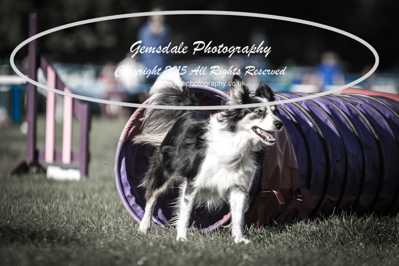 KC Southdowns Agility September 2015 -2015