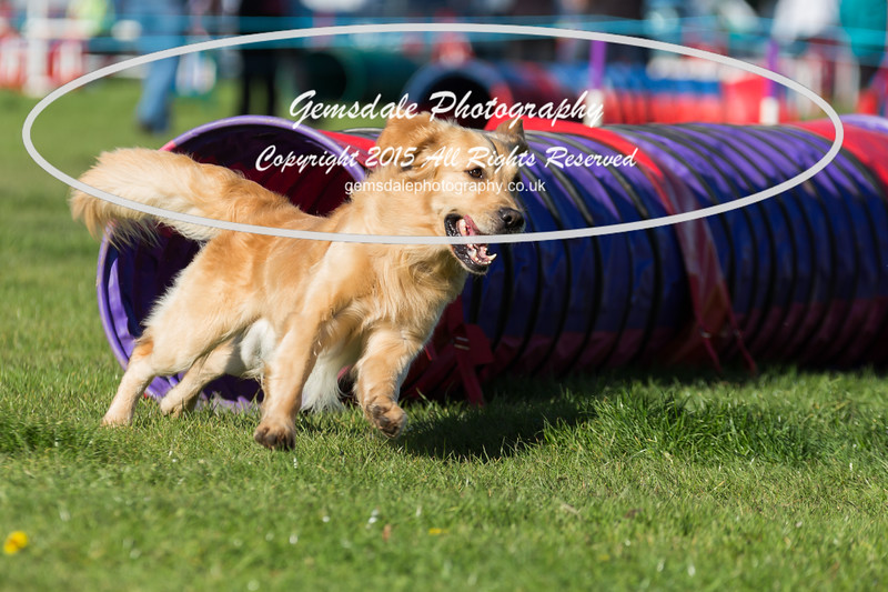 KC Southdowns Agility September 2015 -2019
