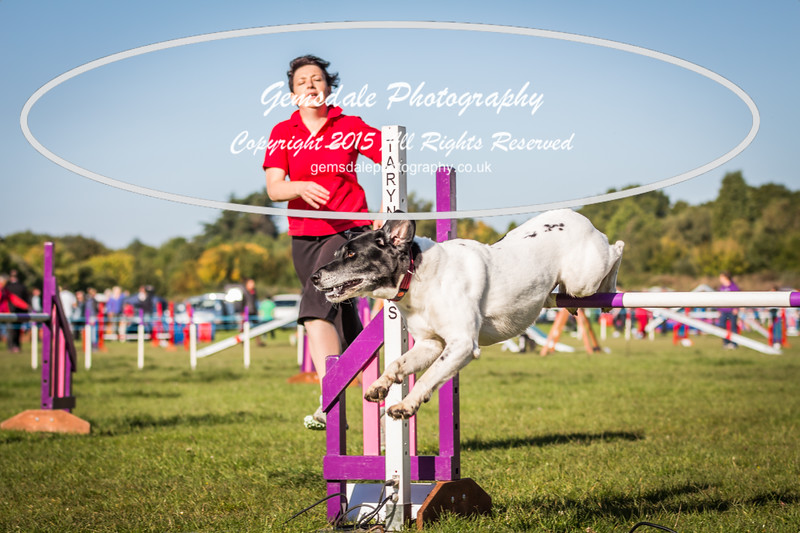 KC Southdowns Agility September 2015 -2012