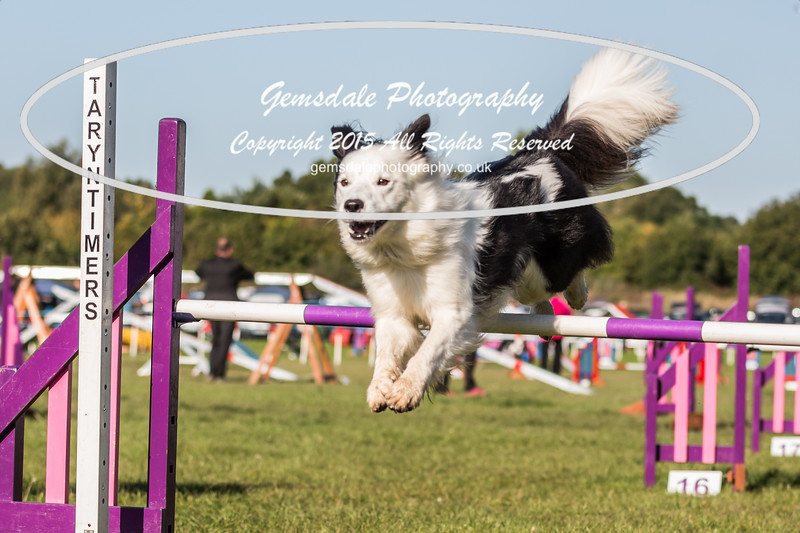 KC Southdowns Agility September 2015 -2030