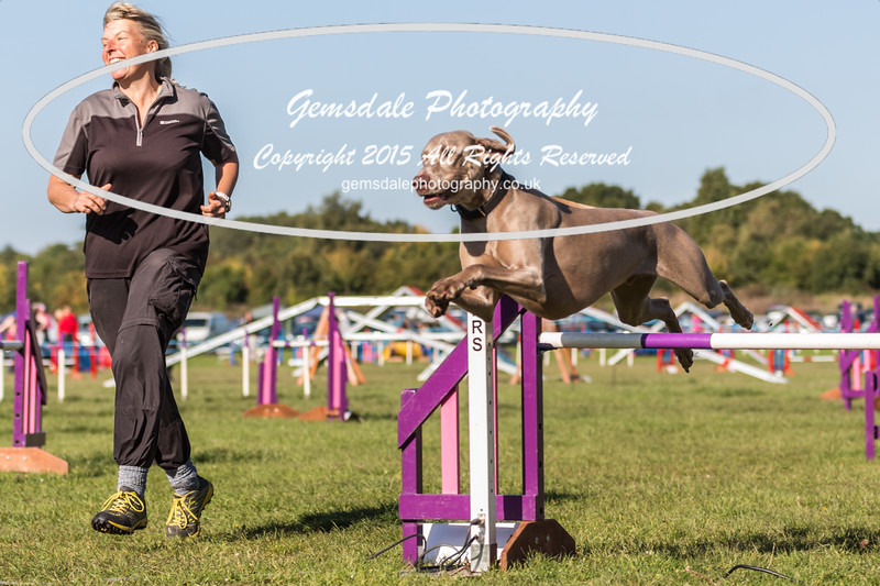 KC Southdowns Agility September 2015 -2044