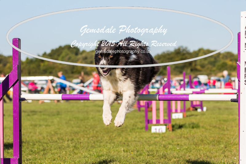 KC Southdowns Agility September 2015 -2001