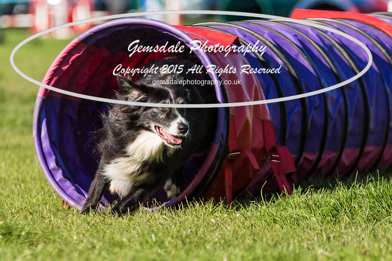 KC Southdowns Agility September 2015 -2021