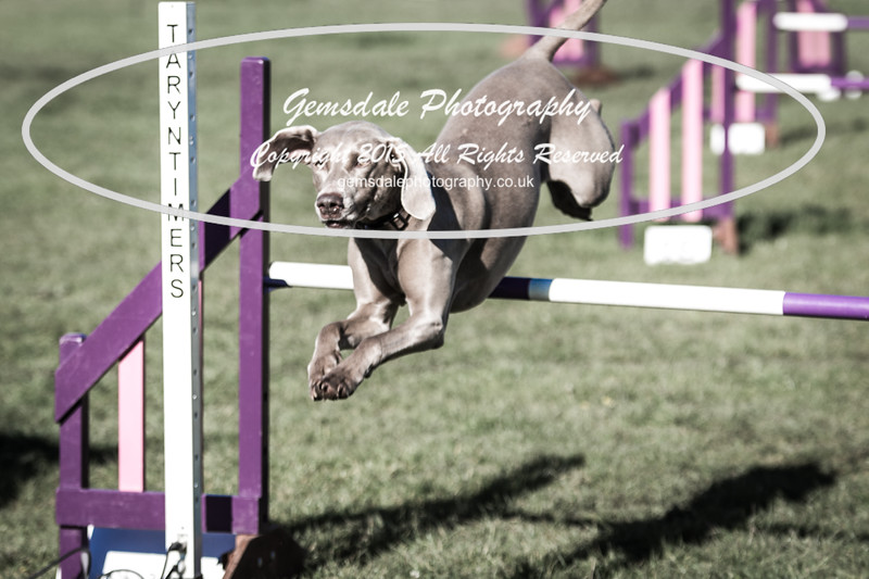 KC Southdowns Agility September 2015 -2010