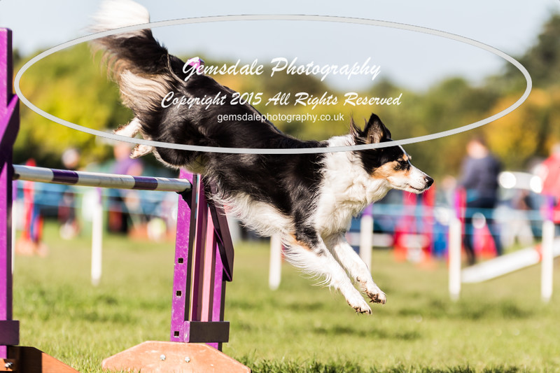 KC Southdowns Agility September 2015 -2016