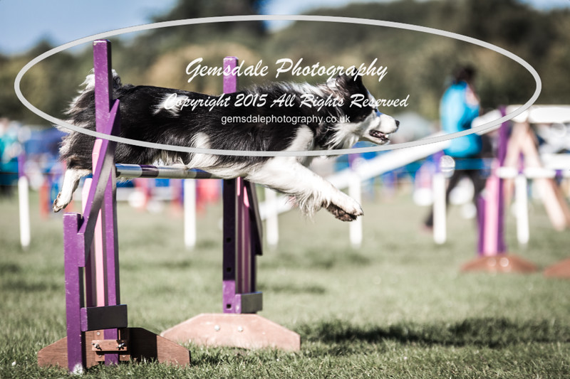 KC Southdowns Agility September 2015 -2029