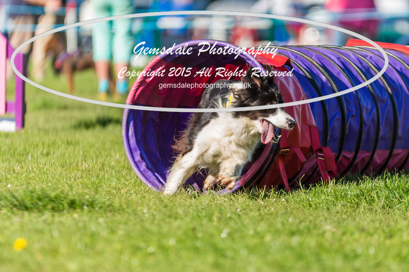 KC Southdowns Agility September 2015 -2008