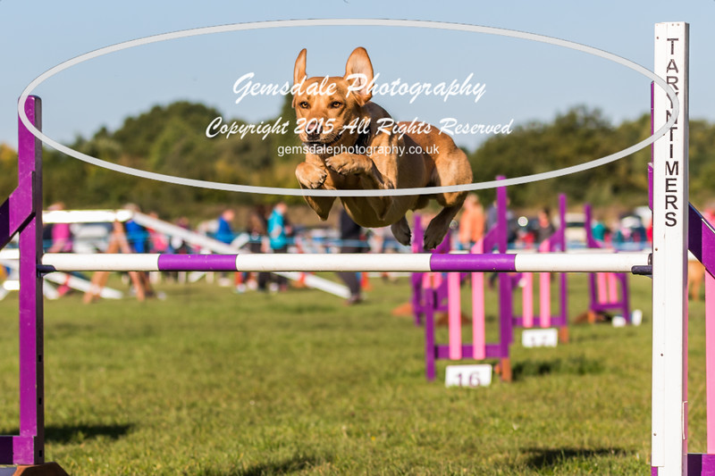 KC Southdowns Agility September 2015 -2005