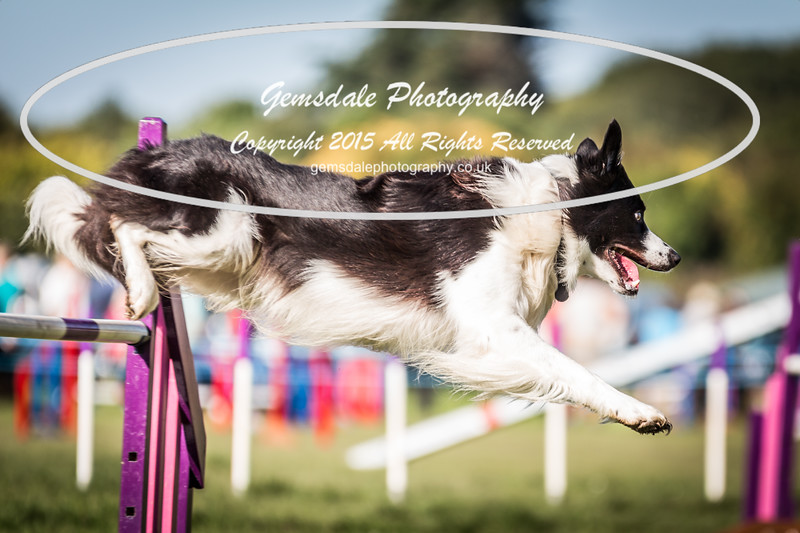 KC Southdowns Agility September 2015 -2035