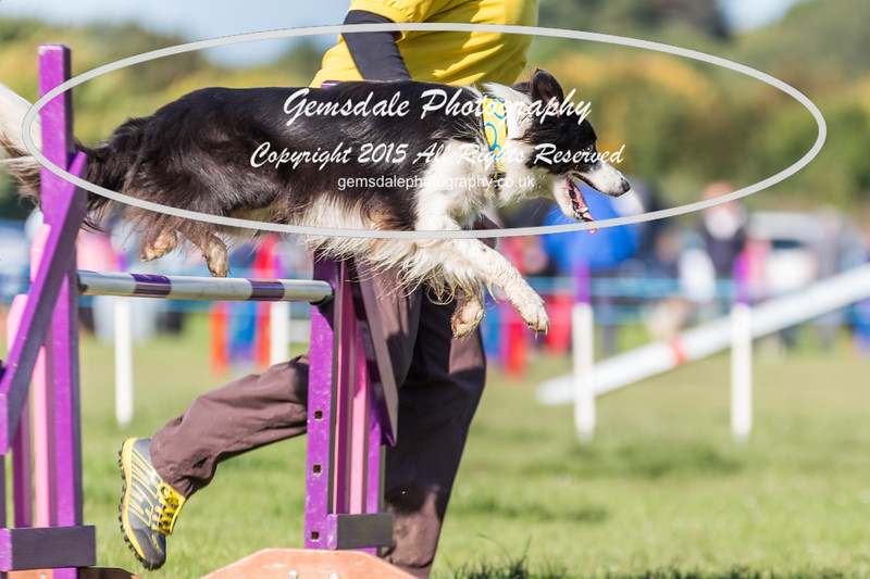 KC Southdowns Agility September 2015 -2009