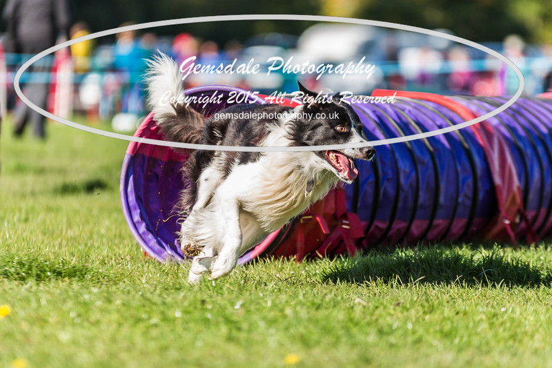 KC Southdowns Agility September 2015 -2034