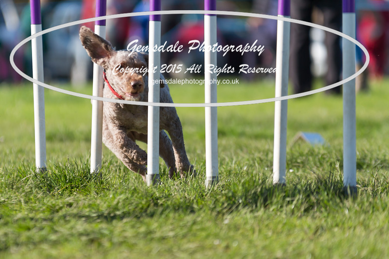 KC Southdowns Agility September 2015 -2000