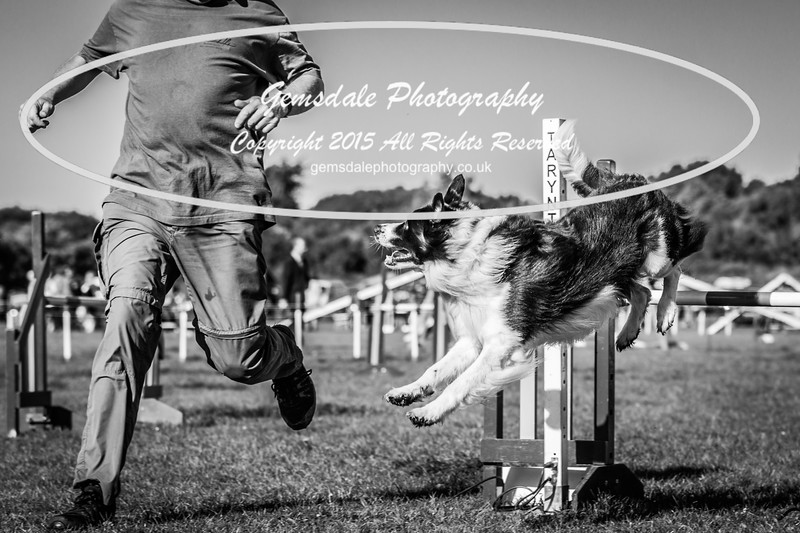 KC Southdowns Agility September 2015 -2036