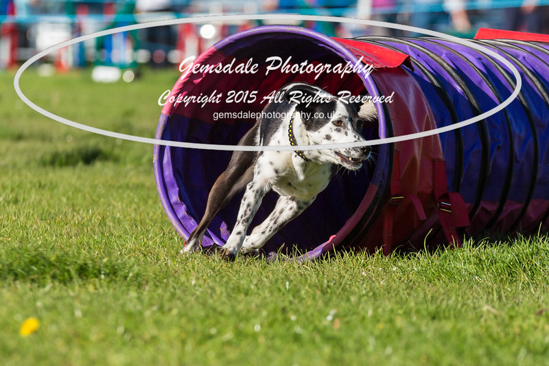 KC Southdowns Agility September 2015 -2022